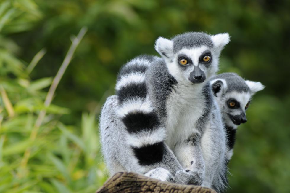 """""""Halo Madagaskar!"""". Edukacyjny park dla młodych odkrywców"""