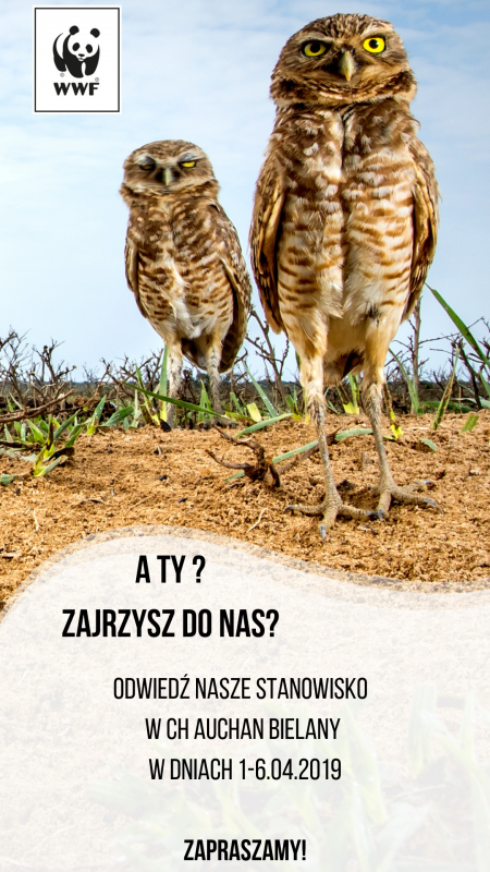Dowiedz się, jak chronić ginące gatunki zwierząt – akcja edukacyjna WWF