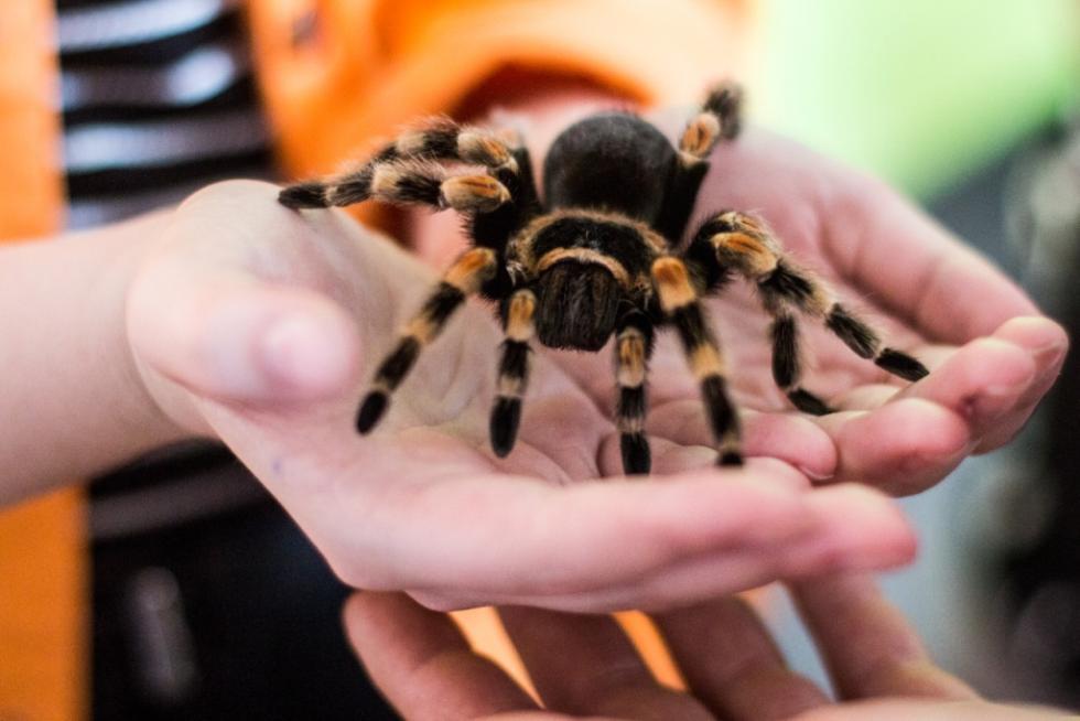 Niesamowity świat pająków zagości wSky Tower